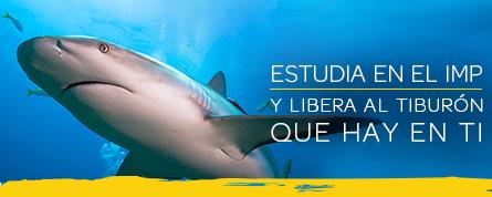 Estudia en el IMP y libera al tiburón que hay en ti